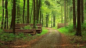 foresta per concetto ecologia