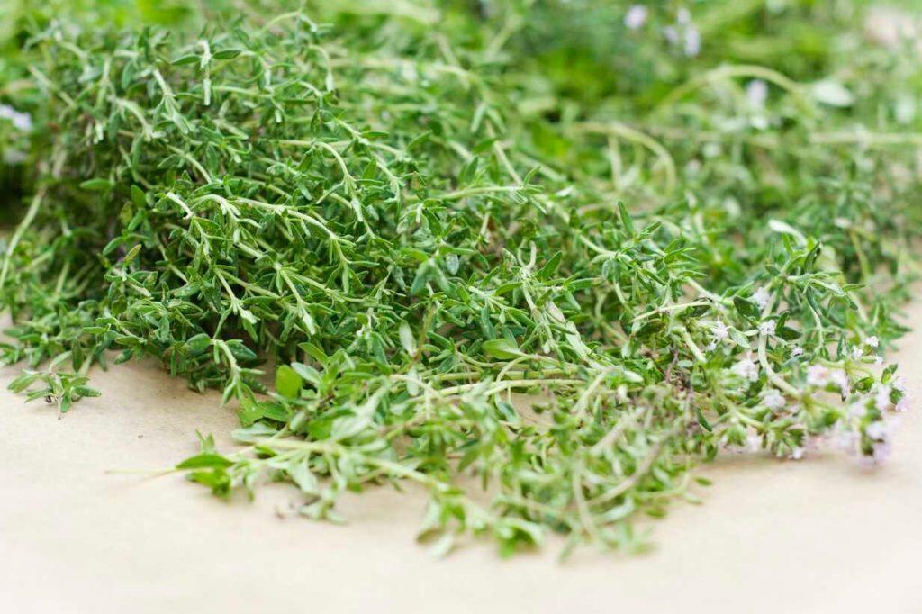 rametti di timo tra le erbe aromatiche in cucina